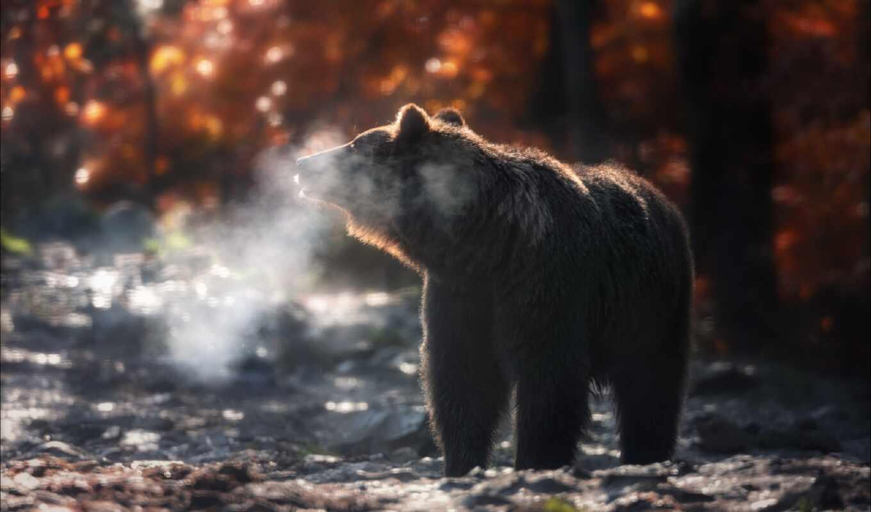 осень, медведь, фото, хороший, hatinka, lisov, come, фотограф, sokolovskii, vlada
