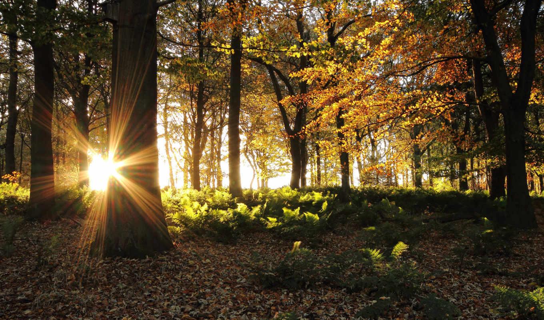 папоротника, неразобранное, альбома, килобайт, заросли, лес, солнечные, лучи, освещают, осенний,
