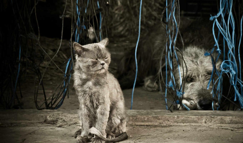 cats, кот, cute, home, pets,