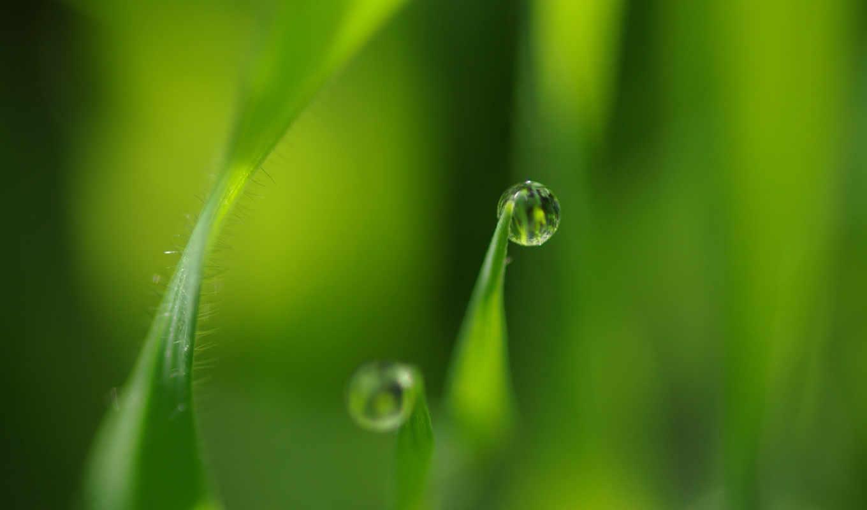 роса, совершенно, категория, drops, листья,