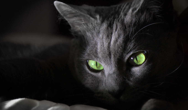 кошка, кот, greycat,