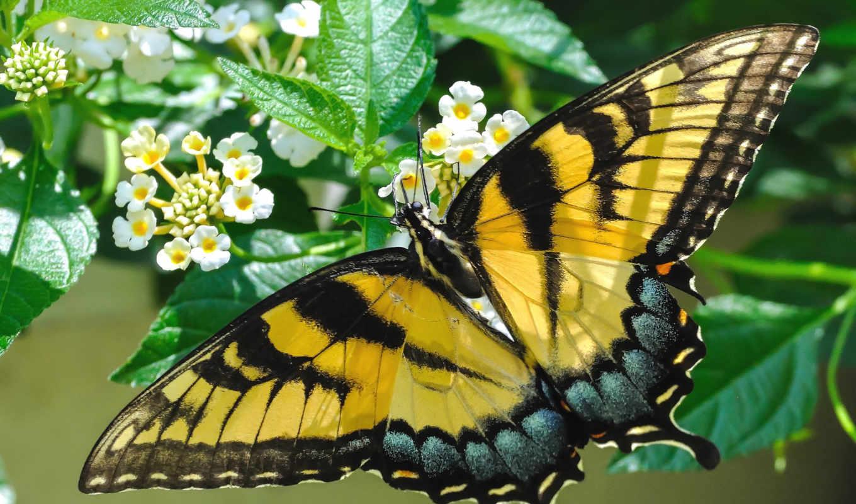 you, бабочка, первую, exact, если, don, resolutions, looking,