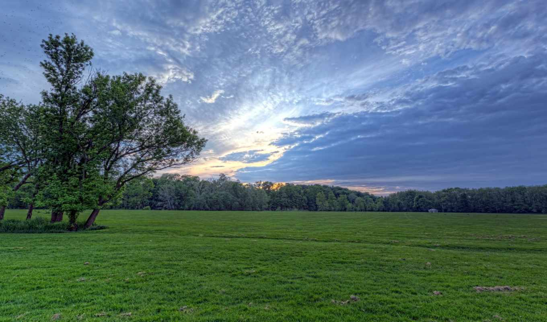 небо, луг, поле, clouds, дерево, фон, зеленые, trees,