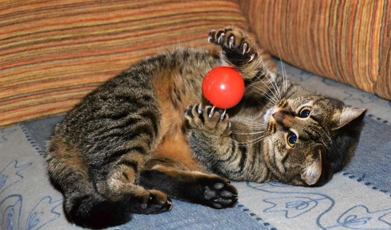 video, изображение, кот, nike, мяч, играет, shariki, вороны, шариком,