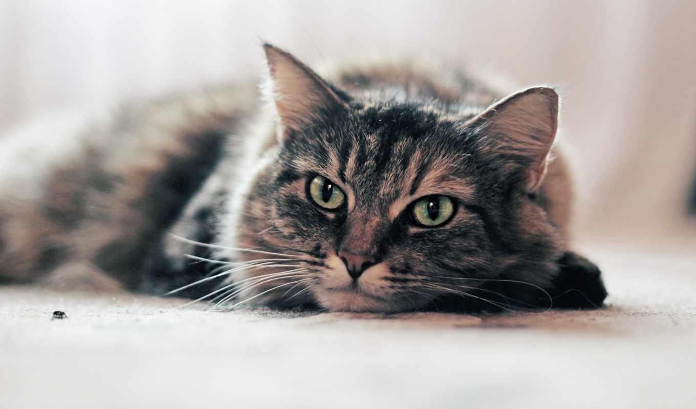 кошки, страница, качественные,