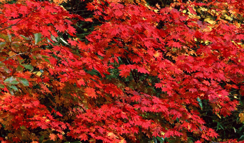 autumn, прекрасных, подборка, отличных, сборник, turbobit, depositfiles, kphy, trees, nature, hokkaido,