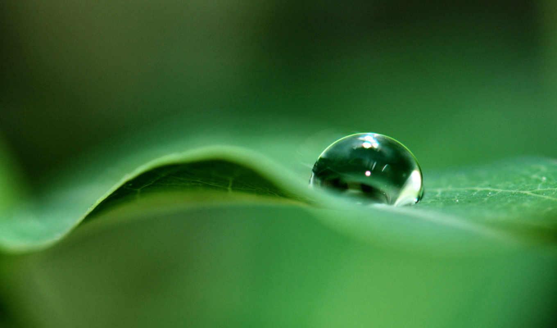 drop, image, leaf, nature, download, росы, android, зеленом, листке, капелька,