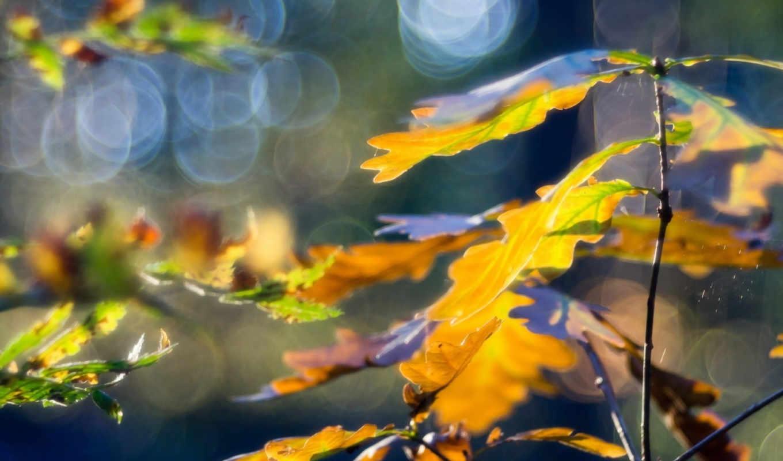 макро, листья, осень, картинка,
