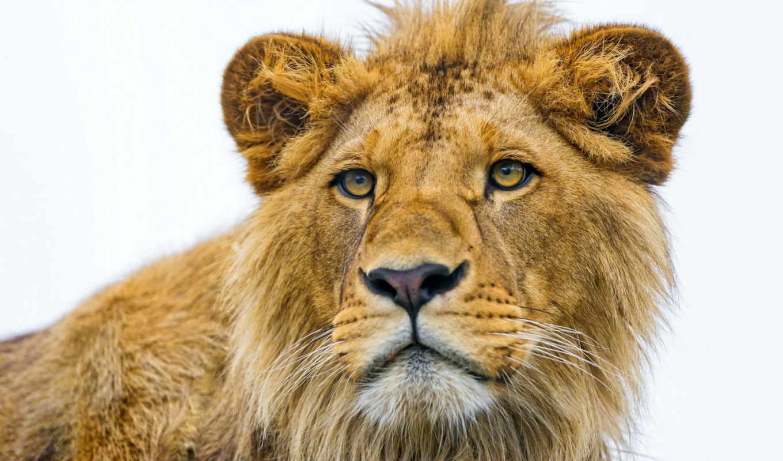 июня, play, lion, морда, views, строительстве, загородной, zone, мужчина, поздно, рано, но, своего, задумывается, участка, покупке, дома, pack, возникают, сразу,