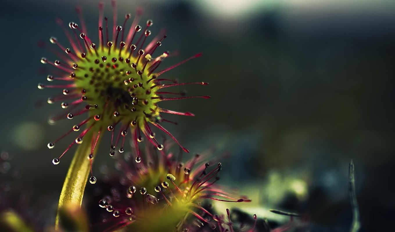 цветы, часть, макро, природа, подборки,