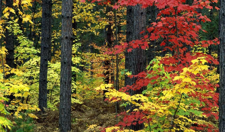 осень, мониторе, тысячи, категориям, отсортированные, тона, природа, michigan,