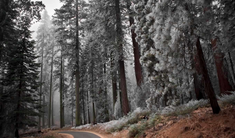 стиль, winter, лес, дорога, поле, landscape, высоком, among, забор,