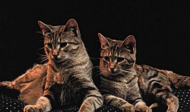 кошки, pour, ест, les, une, chats,