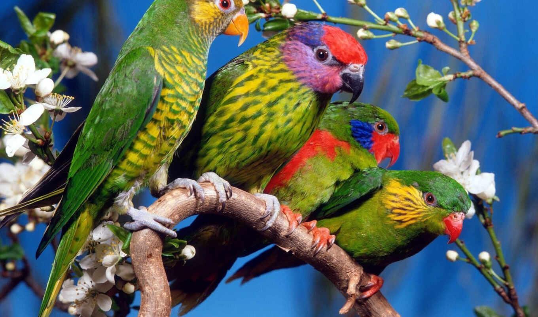 oiseau, попугай, птица, branch, multicolored, product, amour, chez, cuba, perroquet, bête