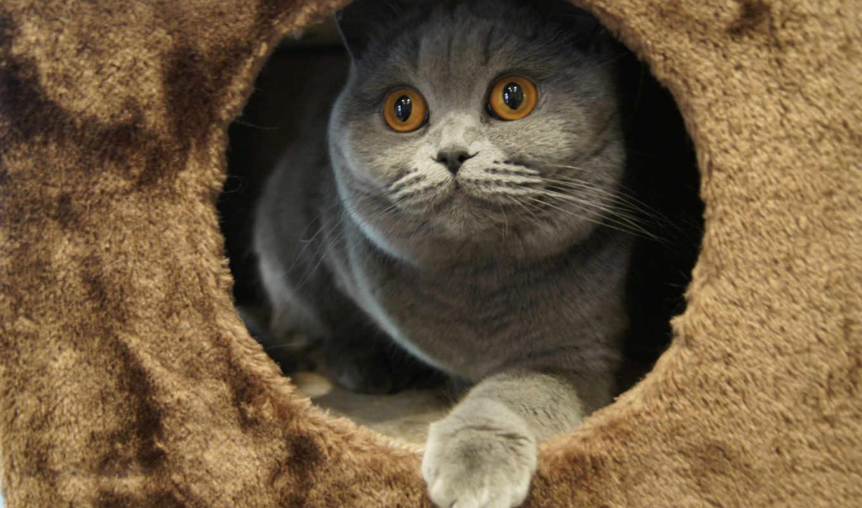 ,серый, игривый, сидеть, кот