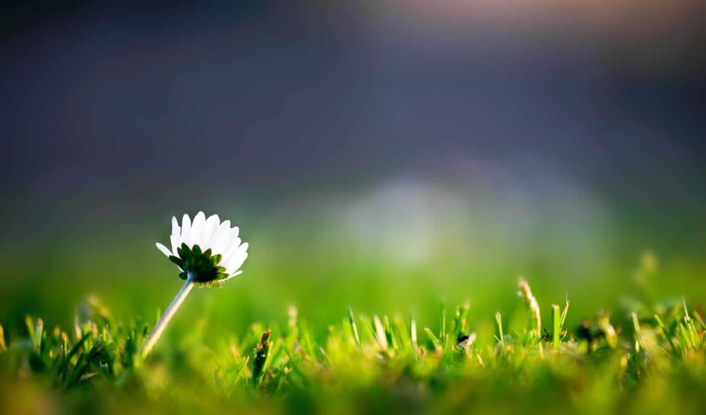 цветок, трава, макро, nature, iphone,