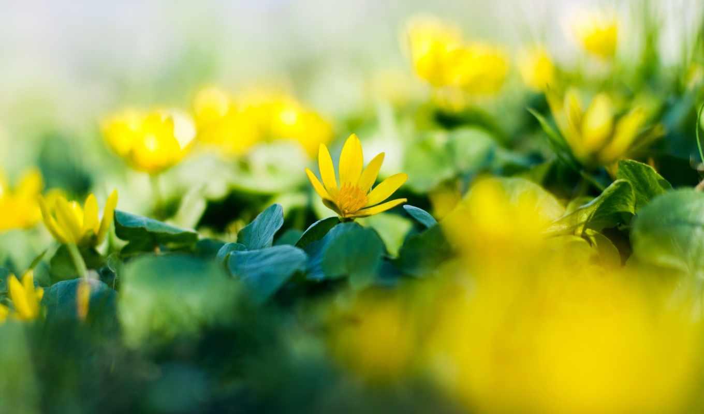 spring, garden,