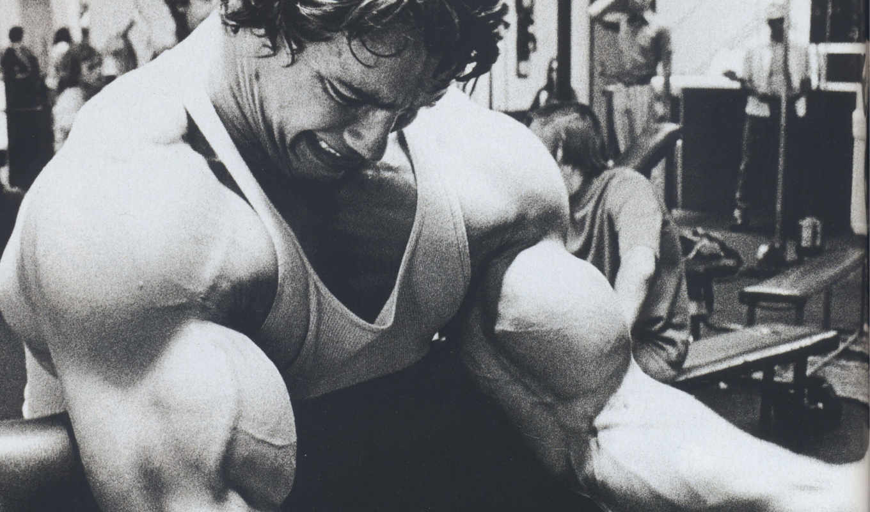 arnold, шварценеггер, schwarzenegger, актер, продюсер, спорт, картинка, бодибилдинг, молодой, режиссер, bodybuilding,