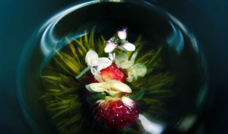 орхидея, цветок, ваза, стеклянная, орхидеи,
