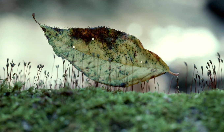 природа, листья, фото,