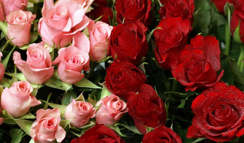 роза, garden, red, цветы,