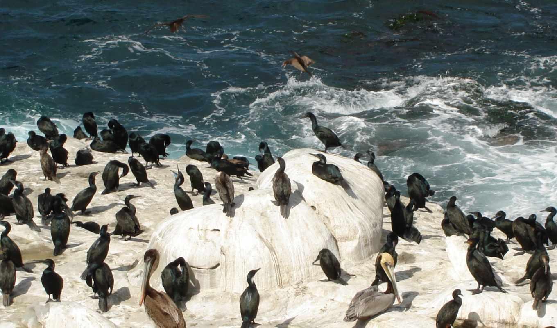 лед, снег, пингвины, glacier, овцы, zhivotnye, devushki, птицы, антарктида,