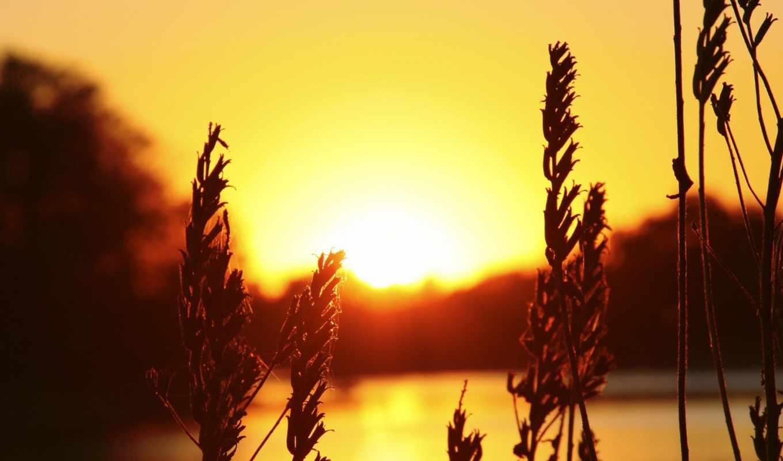 wallpapers, wallpaper, hd, скачать, широкоформатные, поле, sunset, خورشید, заката, ассорти,