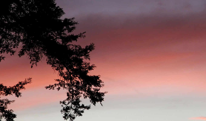 dark, branch, sunset, tree, this,