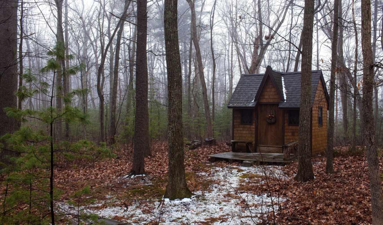 осень, лес, домик, деревья, пейзажи,
