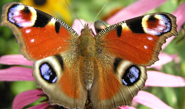 butterfly, flying, дек, free,