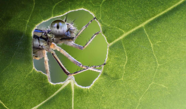 природа, насекомое, лист, еда, глаз, лапки, челюсти,