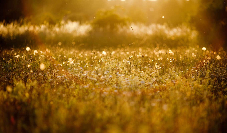 трава, природа, зарегистрируйте, дотянуться, войдите, найти, растения, россия, других,