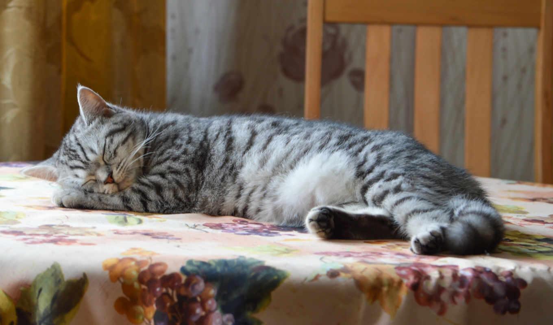 столик, кот, спать, hvatit