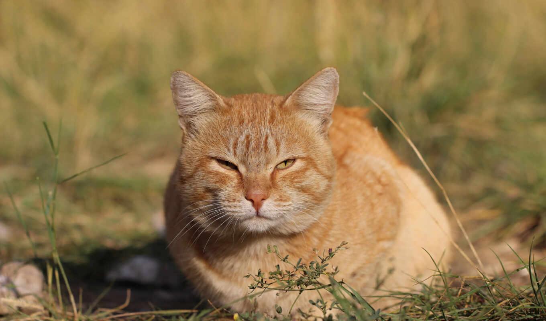 кот, grassland, tech