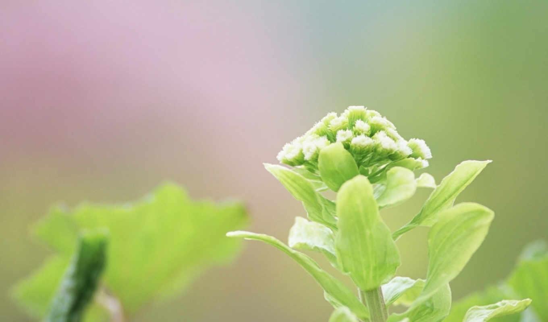 макро, green, фона, украшения, фотографии, лето, зеленые, код, лист, листочки,