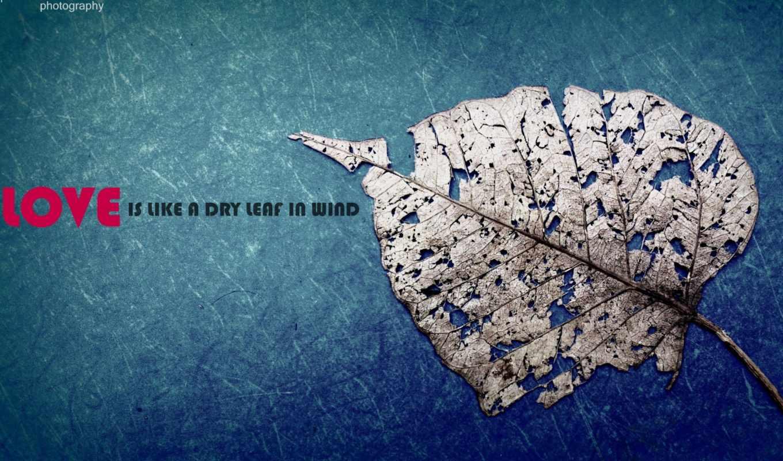 love, афоризм, лист, сухой, синий