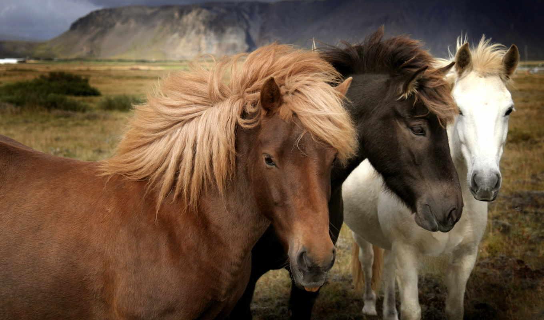 чтобы, лошади, зарегистрируйтесь, широкоформатные, лошадей, войдите, связаться, нужно, друзей, других, найти,