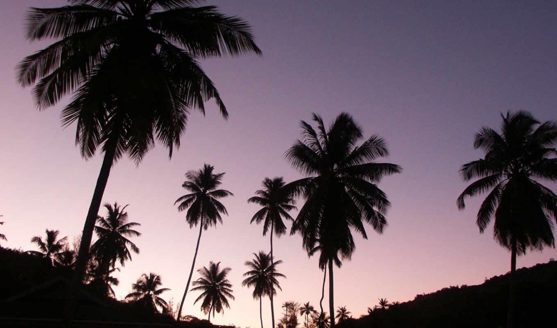пальмы, fone, неба, фиолетового, природа, рисунки, тегом,