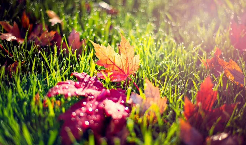 листья, желтые, трава, красные, осень, капли, макро, природа, роса,