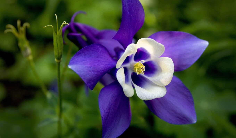 цветок, ekstraktovyi, грустный, lukovica, yaskrav, tm, описание, cena, opt, украина, лилия