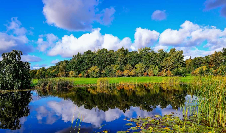 finland, пруд, камыш, лес, облака, отражение, пейзаж,