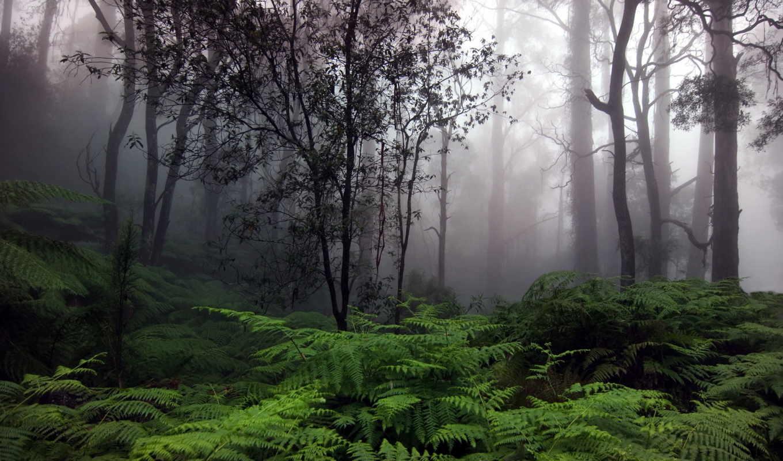 фотографии, природа, красот, природы, лес,