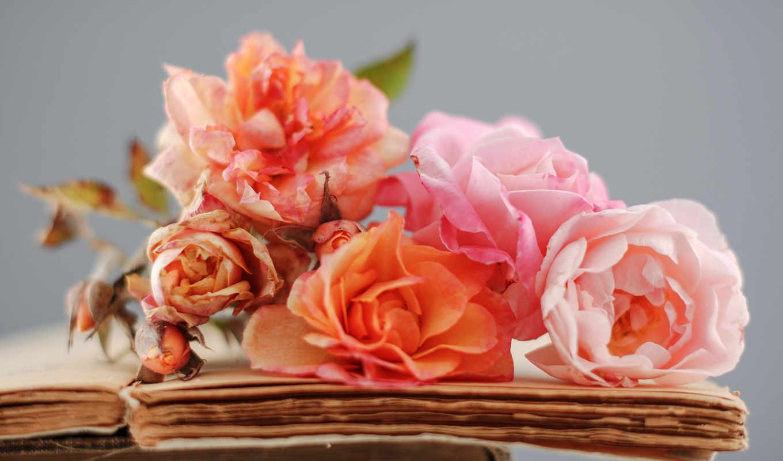 цветы, розы, книга, red, книги,