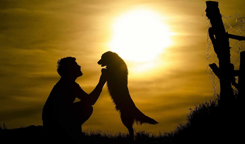 мужчины, силуэт, собака, собаки, sun, мужчина, парень, лапы, настроение, коллекция,