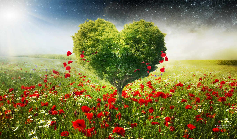love, ромашки, маки, сердце, desktop, поле,