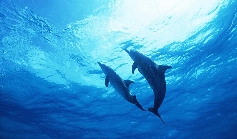 house, экран, красивые, остров, дельфины, весь, солнца, zhivotnye, дельфинов, фотообои,