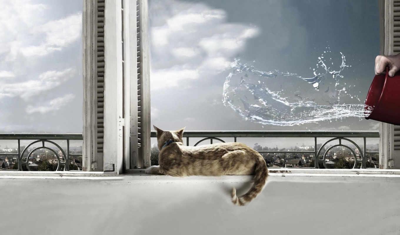 кот, вода, окно, cat, кошки, картинку, картинка, кнопкой, животные,