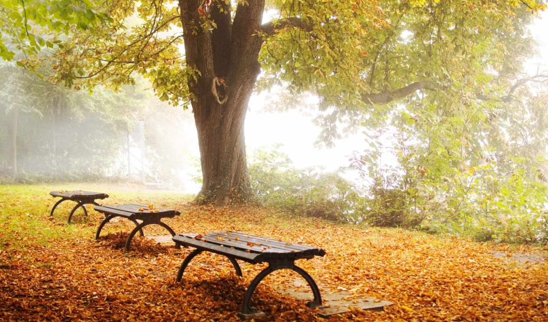 осень, парк, дерево, природа, лавки, листва,