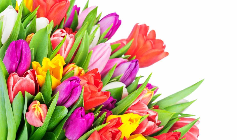 фотограф, photos, другие, flowers, stock, букет, tulips, tulip, тюльпанов, съёмки, января, виталий, royalty, радунцев,