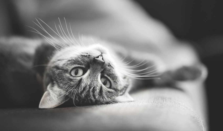 кошки, кот, коты, котята,